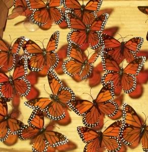 Butterfly Echo